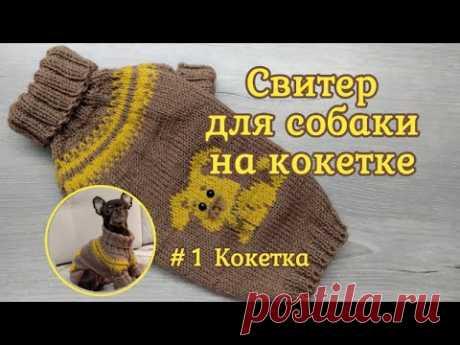 Свитер для собаки на круглой кокетке спицами, #1