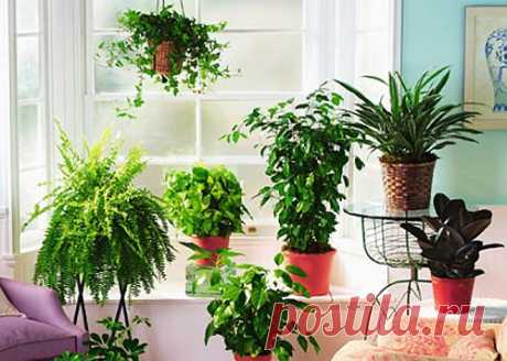Растения-помощники.
