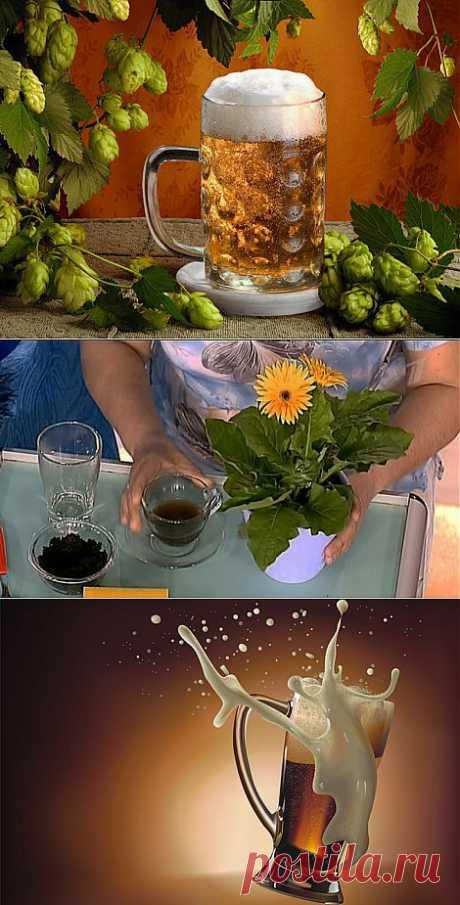 Как использовать пиво в хозяйстве | Домохозяйки