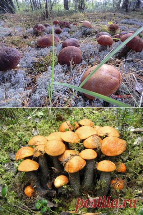 Как сеять грибы (8 фото) - Полезно Знать