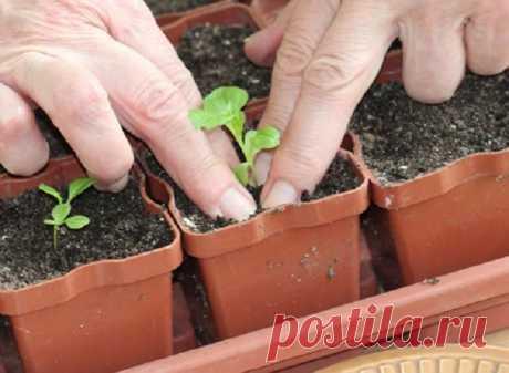 Подготовка земли для рассады: как приготовить почву для рассады самому , рассада без земли, таблетки для рассады | Houzz Россия
