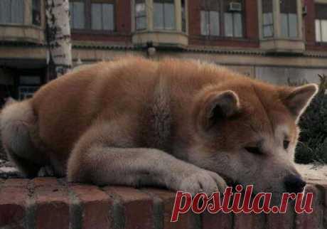 Русские хатико: самые преданные собаки