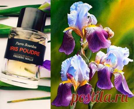6 лучших парфюмов с ароматом ириса Духи с ароматом ириса: 6 лучших композицийНевероятно роскошный цветок Ирис, он любим многими из нас. Ирис покоряет своей красотой и необъятной цветовой палитрой, в которой присутствуют почти все оттенки, разве что нет красной – алой. Его часто выращивают в саду. А в парфюмерии Ирис может быть в