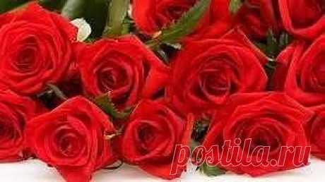 Мальчик подарил девочке 101 розу (100 настоящих и 1 одну искусственную) и сказал «Я буду любить тебя, пока последняя не завянет!»