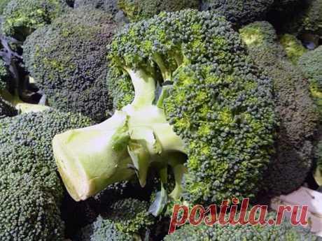 Выращивание брокколи: особенности посадки и ухода в открытом грунте