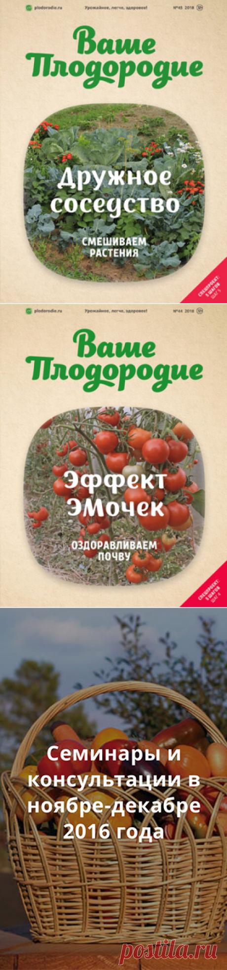 Борис Бублик об огородных грядках Овсинского
