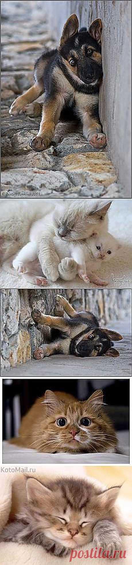 Животные | Постила.ru