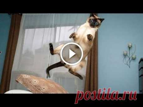 Funniest Animal Fails Compilation 2015