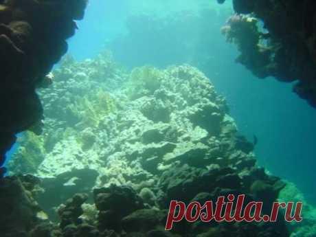 Загадки под водой: какие тайны хранит Марианская впадина / Научный хит