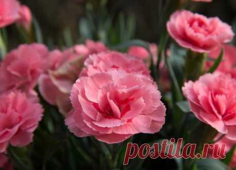Какие цветы нужно сеять на рассаду в декабре и январе? | 6 соток