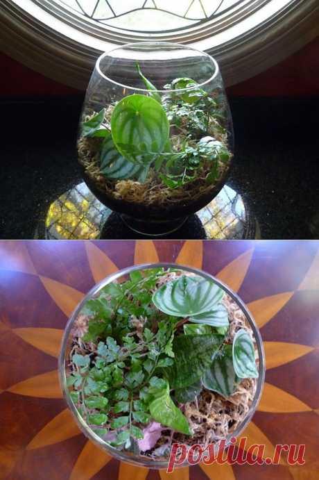 Делаем террариумы с растениями . фото инструкция .