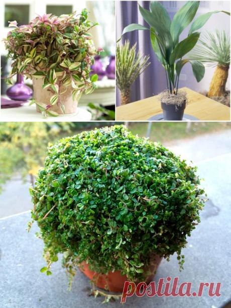 10 неприхотливых комнатных растений для ленивых - Дом и дача - ГОРНИЦА -блоги, форум, новости, общение