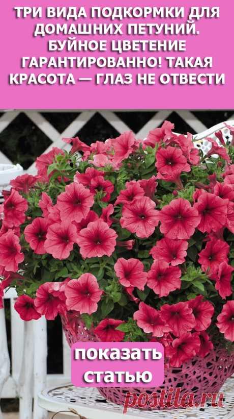 Смотрите Три вида подкормки для домашних петуний. Буйное цветение гарантированно! Такая красота — глаз не отвести.