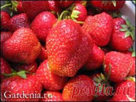 Дайджест сайтa Gardenia.ru Номер 544