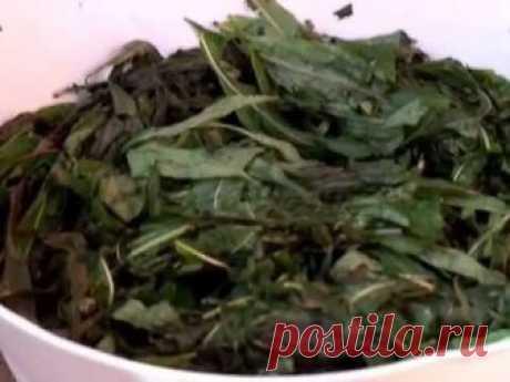 Источник: www.ekush.ru Подробно описан один из способов ферментации иван-чая. Второй этап - скручивание и укладка на ферментацию.