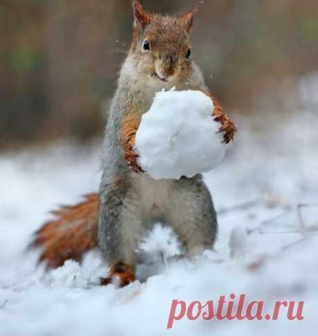 Снежки Автор: Вадим Трунов