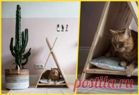 Домики для кошек: удачные идеи, обеспечивающие питомцам максимум комфорта | Краше Всех