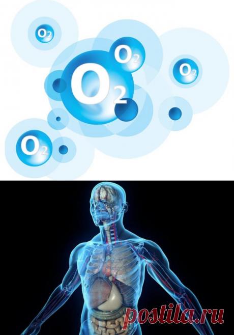 Орган, который отвечает за выведение жира из организма-ЛЕГКИЕ