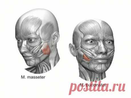 Долой обвисшие щеки. 4 способа омоложения | Golbis