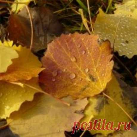Что можно посеять и посадить в огороде осенью | На грядке (Огород.ru)