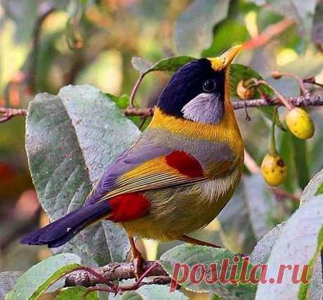 Как прекрасен этот мир, посмотри!.. Птички