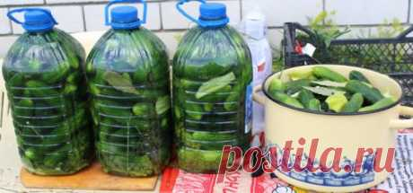 ✔ USEFUL TIPS: \u000d\u000aKeep not to lose.\u000d\u000aCOUNCIL: Pickles (as from a barrel) in a plastic bottle. The recipe under a photo.