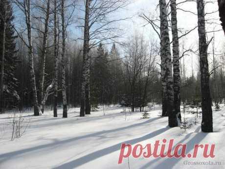 Поиск глухариного тока или один день в весеннем лесу Борьба весны с зимой в марте извечна, ее исход предрешен заранее, но зима ни когда не сдается сразу. На по-настоящему теплые весенние дни, яркое солнце и затяжные оттепели, зима отвечает сурово – люты...