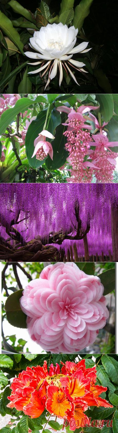 Самые красивые цветы планеты, часть 2