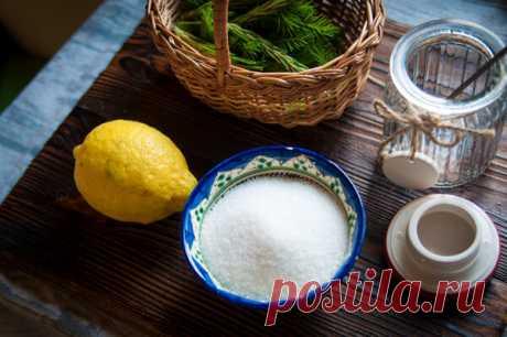 Идем в лес за молодой хвоей: как приготовить ароматный зеленый сахар | Живые вещи | Яндекс Дзен