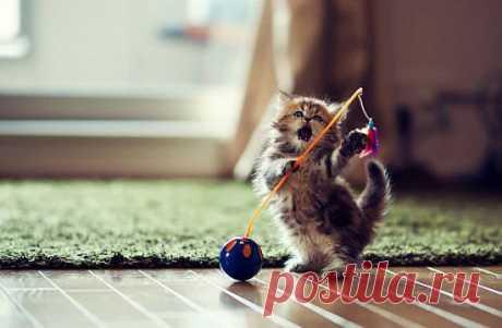 Фотосессия миленького котенка