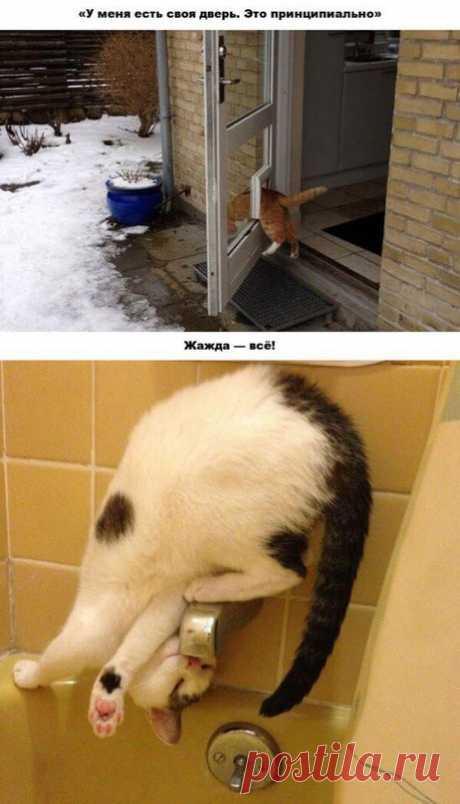 20 amusing examples of iron cat's logic