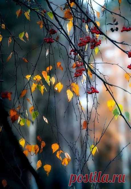 Улетели листья с тополей - Повторилась в мире неизбежность, Не жалей ты листьев, не жалей А жалей любовь мою и нежность. Пусть деревья голые стоят Не кляни ты шумные метели! Разве в этом кто - то виноват Что с деревьев листья улетели. НИКОЛАЙ  РУБЦОВ