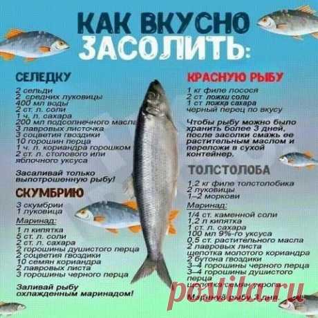 Солим вкусно любую рыбу
