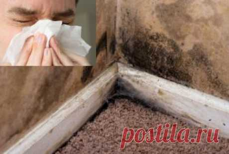 How to get rid of an awful mold in the apartment by means of effective and cheap remedy — Layfkhaki