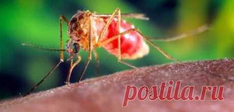 Народные средства от комаров – борьба в домашних условиях |