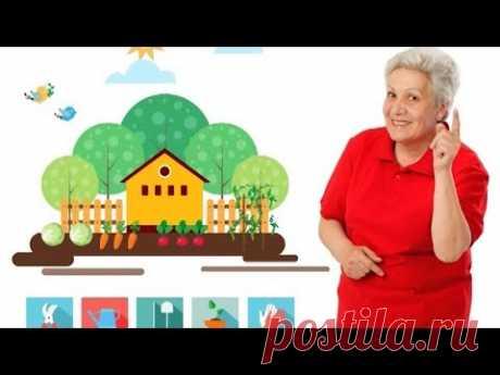 Лук севок: полное руководство от тети Тани