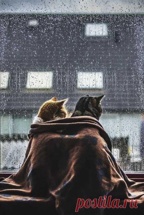 """""""Любовь — это когда кто-то может вернуть человеку самого себя"""".  Анхель де Куатьэ. """"Маленькая принцесса"""""""