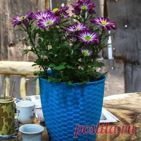 Ротанга Смола Растения Горшок Садоводство Украшение Маленький Цветочный Горшок