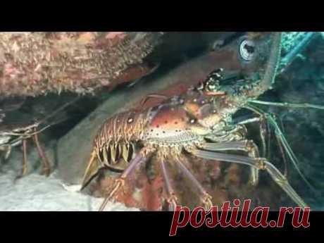 Тайный мир ракообразных / The Secret World of Crustaceans (2013)