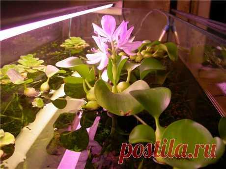 Las plantas de salón que crecen en el agua