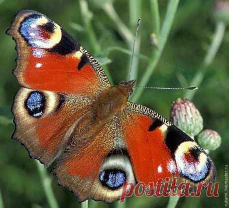 Создаем крылья бабочки из шерсти