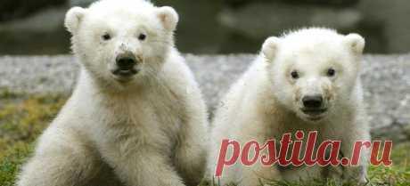 Новые фотографии милые медвежата.