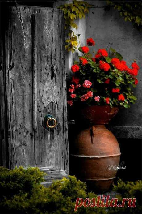 Pin by Виктория on Двери | Flowers, Doors and Gardens