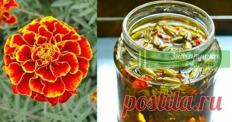 Отвар из бархатцев от 100 болезней лечит. Цветут везде простые цветы, а цена им — золото | Знахарушка - все о здоровье!