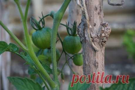 Как поливать огород в сильную жару и не сварить корни: следите за кабачками! — AgroXXI