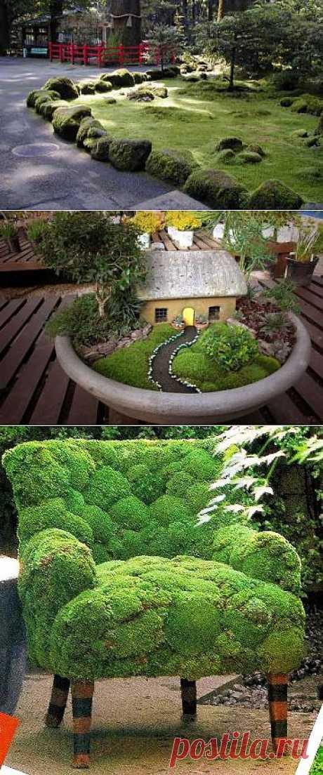Бархатная красота мха в саду.