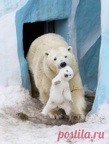 Первая прогулка! Детеныш немного подрос, и мать впервые выпустила его из берлоги на свежий воздух Фото Антон Беловодченко