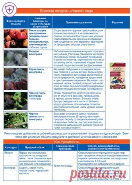 Много проблем у плодового сада - одно решение! Сохраните памятку! #МЕДЕЯ #апрелевна #продукт@aprelevna