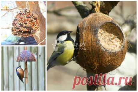 Оригинальные кормушки для птиц: польза и украшение для зимнего сада
