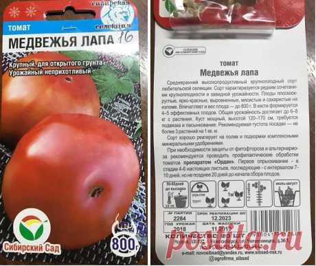 Смотрю, женщина покупает 27 пачек одного сорта томата – после разговора с ней тоже купила, показываю | Зелёные истории | Яндекс Дзен